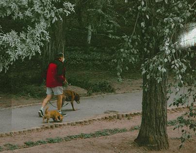Caminatas Matutinas // Morning Walks