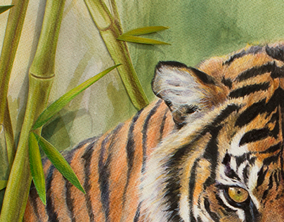 Bengal Tiger_Illustration