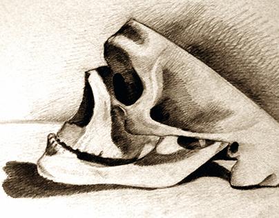 koponya