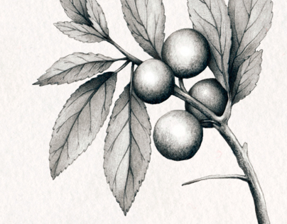 Botanical • Personal