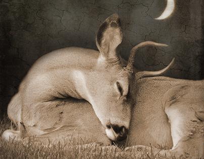 The Life of Deer
