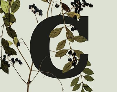 Typographic Specimens