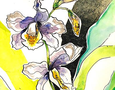 Orquideas 2017