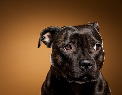 Dog photography with colored backdrops.