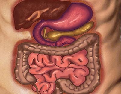 illustration digestive system