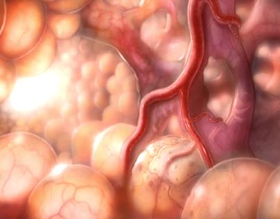 Alveolar type II cell animation