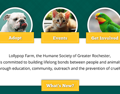 Humane Society Homepage Redesign