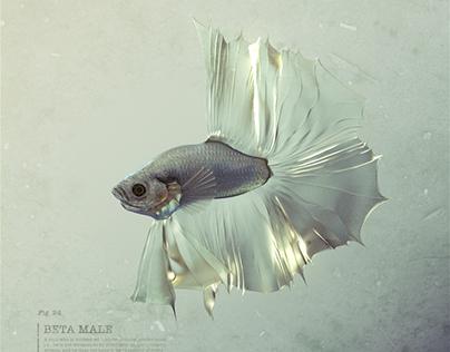 Beta Male