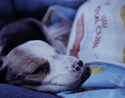 Royal Canin Junior Nodriza