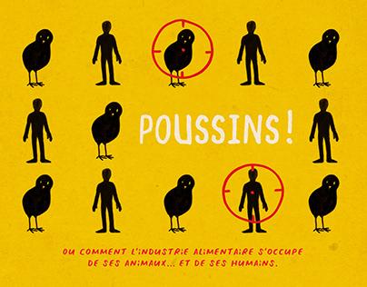 Poussins !