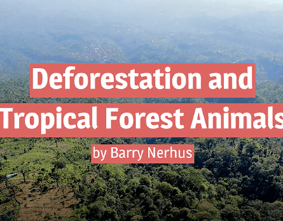 Deforestation's Effect on Tropical Forest Animals