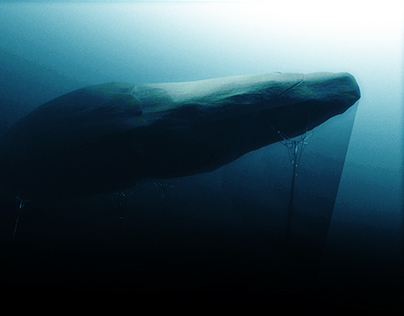 The sounds of the whale