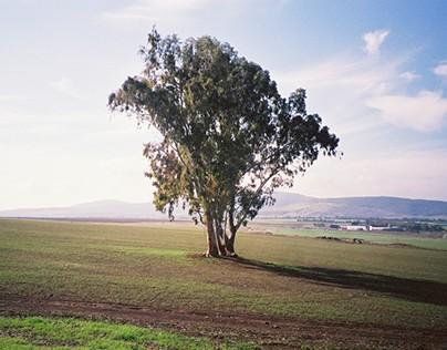 Views of Galilee