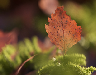 10K leaves