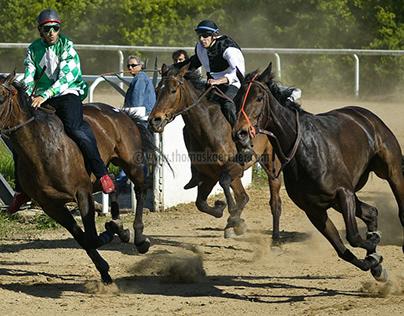 Tuscany Horse Race, Italy