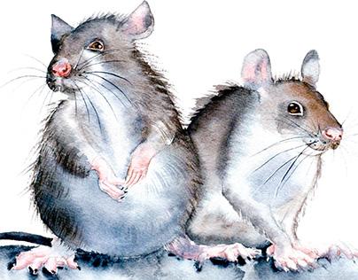 Watercolor rats.