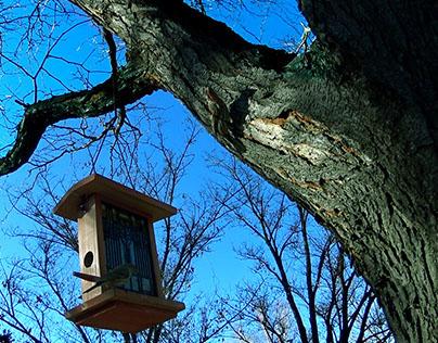 Backyard Birds Cinemagraph