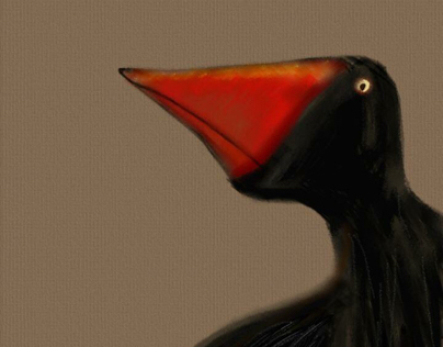 Crow Profile -