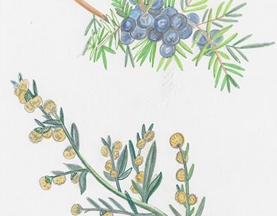 травки для Афиши / herbs for Afisha