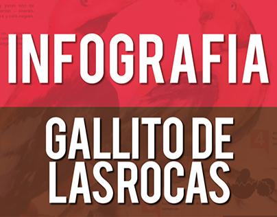 Gallito de las Rocas   Infographics