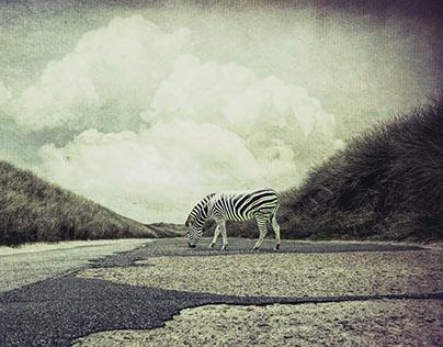 ...zebra crossing...