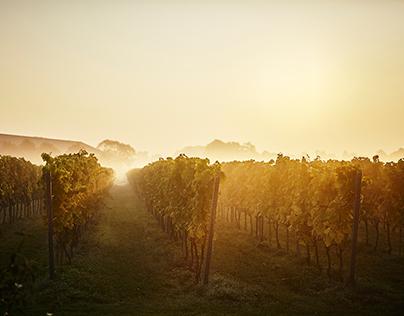 Flyinge Wineyard - Homepage picture