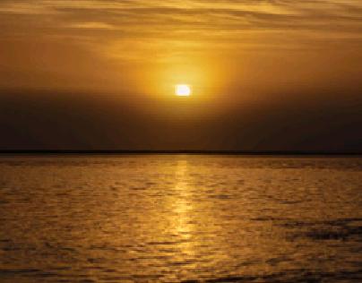 Gold in the morning sun