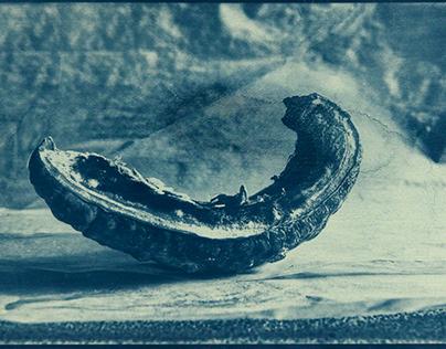 The last Cyanotype