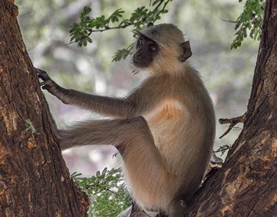 Wildlife Photography : Project Ranthambore