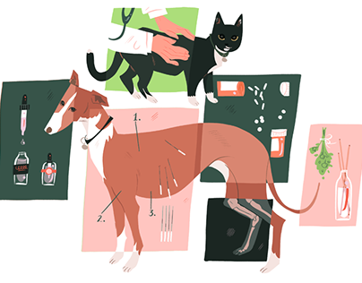 Richmond Magazine: Alternative Medicine for Pets