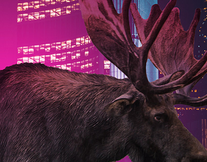 Toronto Moose