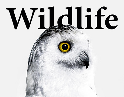 Wildlife unofficial Magazine Cover