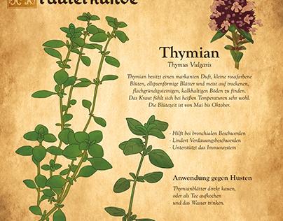 Kräutersammlung - Thymian