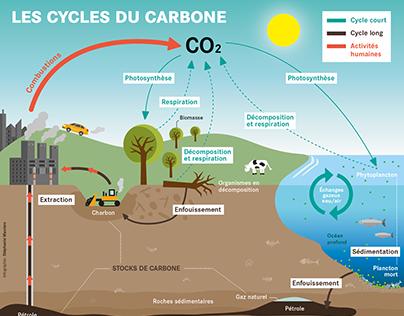 Infographie: Les cycles du carbone. Allez-Savoir! no73