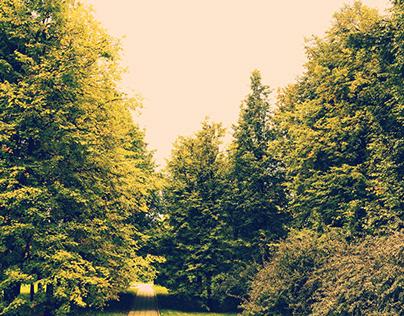 In the autumn park