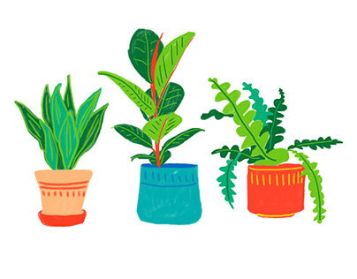 Botanical Apparel Illustrations