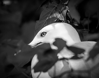 Birds in Black and White