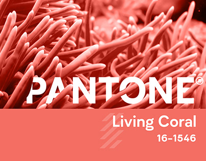 Pantone's Color of the Year 2019 | Living Coral 16-1546