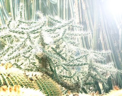 Some Interesting Cactus