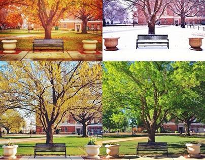 Four Seasons of Oklahoma State University