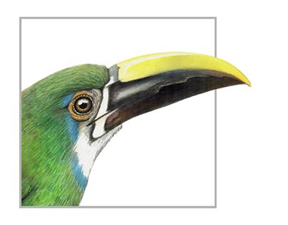 Biodiversidad colombiana ilustrada