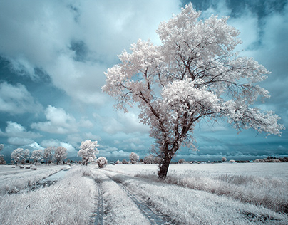 Magical landscapes. Infrared. Poland
