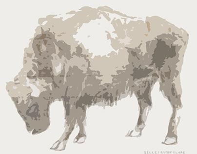 Digital Conversions of Bison Drawings