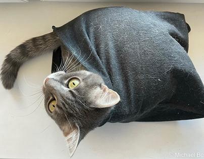 Кошки / Cats / Bobarev.com