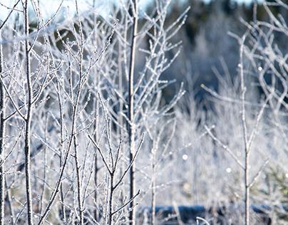 Freezing winter morning