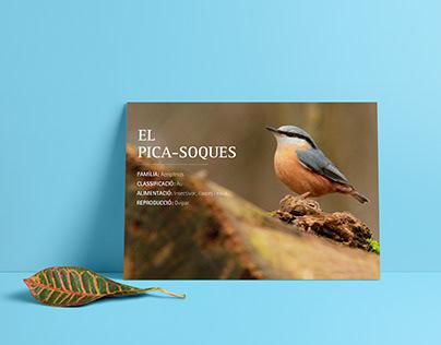Wildlife | Editorial Design