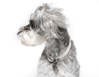Pet Portraits - Dogs