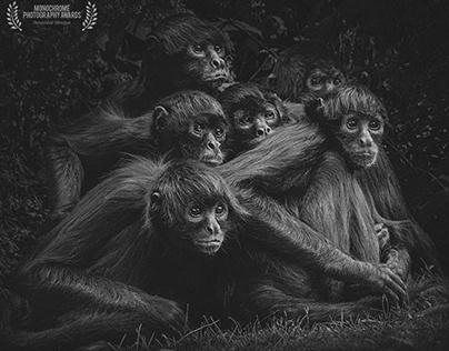 MONOCHROME PHOTOGRAPHY AWARDS 2020 (NATURE)