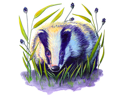Badger In The Long Grass