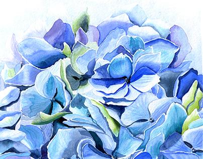 "Watercolor illustration ""Sunny hydrangea"""